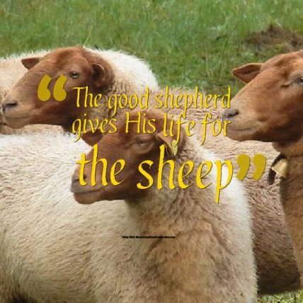 gives his life for the sheep