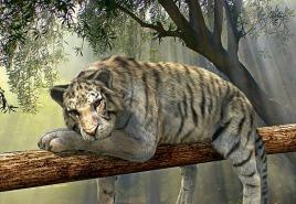 tiger-1098607_640