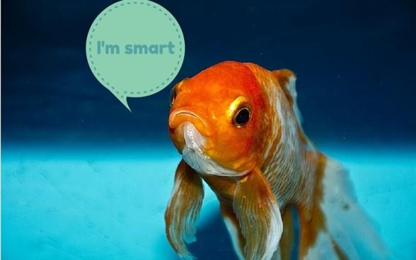 gold fish (1)