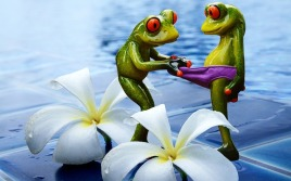 frogs-1190513_640