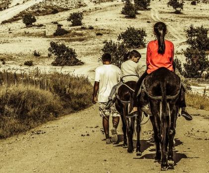 donkey-ride-1786314_640