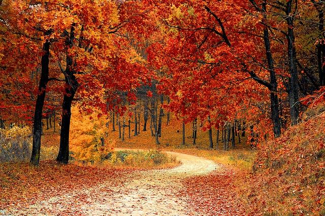 fall-1072821_640.jpg