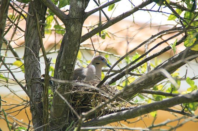 pigeon-188452_640.jpg
