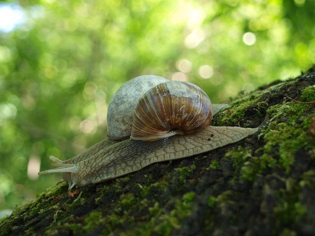 snail-4232612_640.jpg