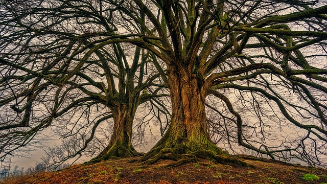 tree-3097419_640.jpg